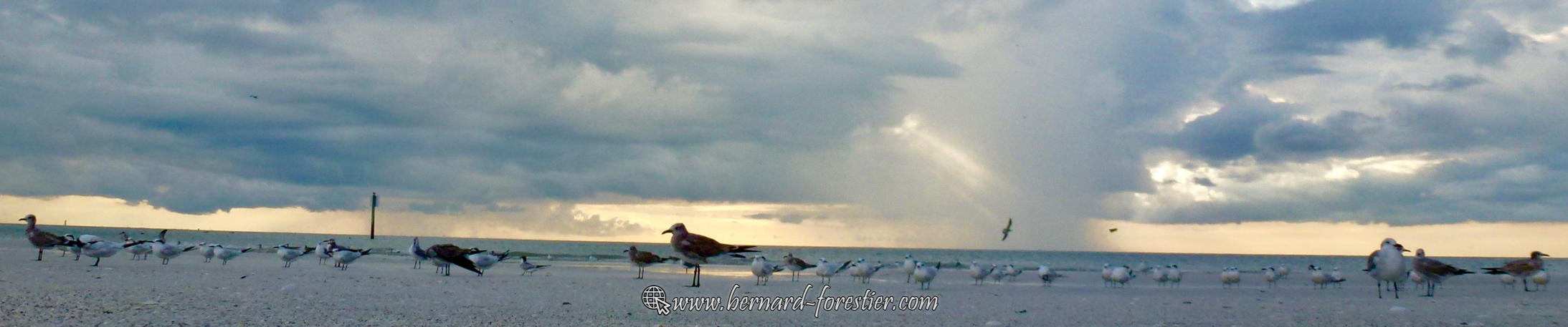 Mouettes et plage de Floride